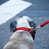 犬の熱中症について調べたことのまとめ。飼い主さん要チェックやでぇ!