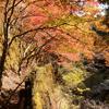 岡山県有数の紅葉スポット「奥津渓(おくつけい)」に行ってきました!