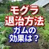 モグラ退治でガムって効果あるの? 【身近なもので家庭菜園を守れます】