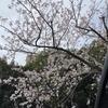 【強制活動自粛】沈黙のプジョー3008