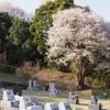 霊園風景 その25 「‥‥愛しさ伝えて 桜色」