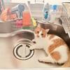 猫の侵略からキッチンを守れ!キッチン防衛隊