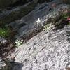 娘と夫と木曽駒ヶ岳 ちょっと届かず中岳まで、きれいすぎる千畳敷カール           8月3日