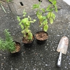 【農地拡大!】ぼくのゲリラ菜園、ヤーマンファームを拡大した!