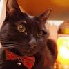 今日の黒猫モモ&黒白猫ナナの動画686