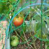 トマトとオクラの収穫