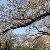 18.65kmと桜