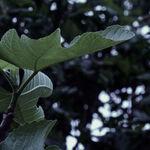 眠りにつく木々を味わいながらGWを思い返す【フォト雑記】