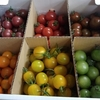 【食べチョク】ミニトマト6種を食べ比べるよ【トマトの宝石箱】