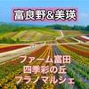富良野&美瑛2021花巡りレポ【ファーム富田と四季彩の丘】
