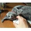 10年前、うちにも猫がいました。