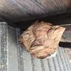 湖西市で軒下にできたスズメバチを駆除してきました