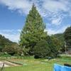 勝俣部長の健康体質作り・・・・高尾山「健康を体感する」(36)