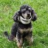 犬の保険に加入してみた。