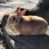 今日の景色 12/23 ウサギ