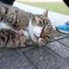 1月前半の #ねこ #cat #猫 その1
