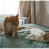 秋深し抱けばずしりと猫育ち 松本恵子