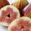 【イチジク】夏果と秋果で剪定方法が違う!?イチジクの剪定について