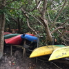 沖縄 西表島の森が、想像以上にジャングルだった…という写真集。西表島はマングローブの森が広がる、おすすめの国内旅行先です。