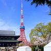 3月27日(火)花見客で賑わう芝公園&増上寺と、旅番組を見て行きたくなった勝浦の宿。