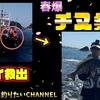 【フカセ釣り】海に落ちそうなジジイを助けたらチヌが祭りを催してくれた日。和歌山県みなべ地区鹿島丸渡船【平島】