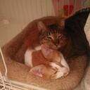 イギリス貧乏暮らしブログ    ただし猫つき