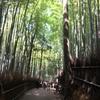 京都、大阪観光。