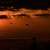 🌞朝焼けの日の出と鳥