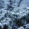 「平成31年4月27日。雪。」