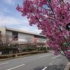 【竹橋】桜咲く紀伊国坂(きのくにざか) 国立近代美術館・国立公文書館・乾門