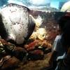 雨でも楽しい!新江ノ島水族館