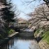 チンドンコンクール前夜祭と桜満開の松川べり