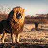 ライオンの様な髪へ!!チビ・デブ・ハゲ三重苦からの脱出。