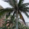 【恩納村】沖縄旅行記〔19〕カフーリゾートフチャクコンド・ホテルの朝散歩