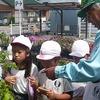 2年:夏野菜の苗の購入 運動会練習