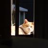 2月12日 千葉県浦安市猫実で猫さま歩き とその情景