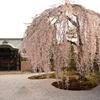 秀吉とねねが祀られた「高台寺」の見所を紹介 (Kyoto,Kodaiji)
