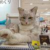 名古屋タカシマヤの味めぐり会場で大きな猫さんに遭遇