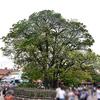 大きな木も少しずつ成長