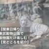 【関東日帰り】東武動物公園で動物園だけ楽しむ!【見どころを紹介】