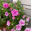 再び花が増えてきた!