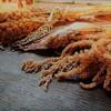 【食と生命の関係】雑穀を含めた日本古来の伝統食による生命力と料理のヒミツと、和ヴィーガンの豊かな可能性を知る!ヴィーガン歴35年の大谷ゆみこ氏が語る、つぶつぶ未来食セミナーに参加しました。