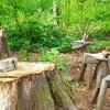 養命酒健康の森~生薬のリース作り