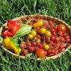 食品の放射能データを分かりやすく表示してくれているサイトの紹介
