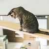猫がジャンプに失敗して毛づくろいするのは照れ隠しじゃなかった!