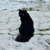 Who'll bell the cat? しかし、猫好きさんならきっと毎日勉強を続けられる猫まんが。