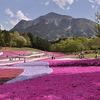 秩父の芝桜シーズン到来!芝桜の丘で春を感じよう2019年
