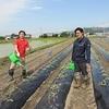 丸三のさつま芋畑2017(水やり)
