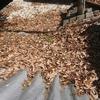 屋根の上の落ち葉に注意してね!