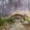 【福岡】CNN 日本の美しい風景31選 河内藤園へ